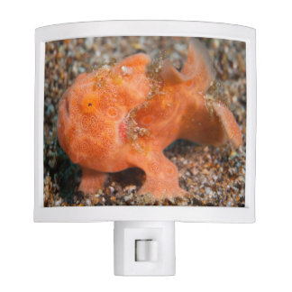 Frogfish Night Light