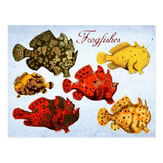 Frogfishes Post Card