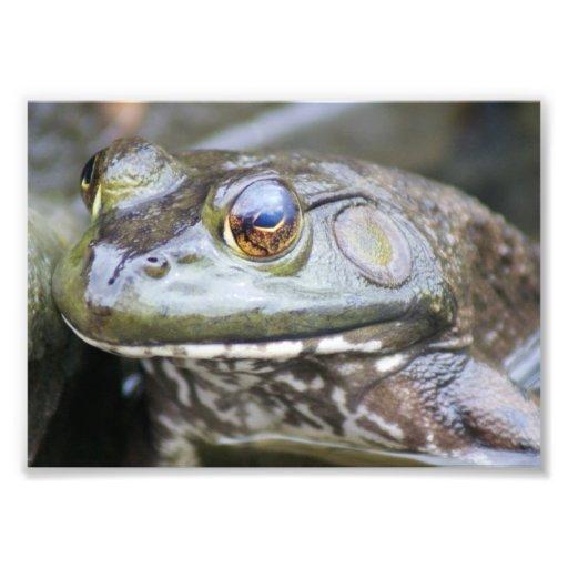 Froggie 7 x impresión fotográfica 5
