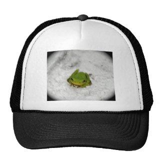 froggy gorras