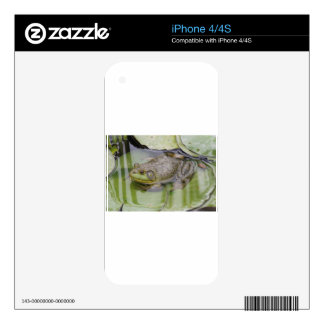 Froggy iPhone 4 Decal