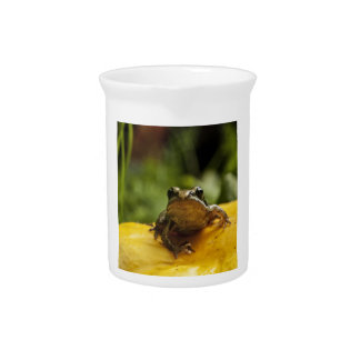 Froggy Beverage Pitcher