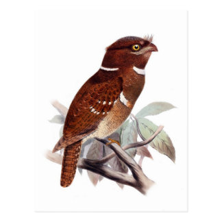 Frogmouth filipino postal
