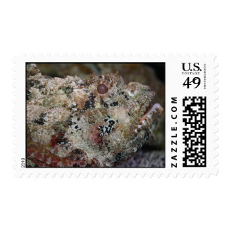 frogmouth fish head view weird animal image postage stamp