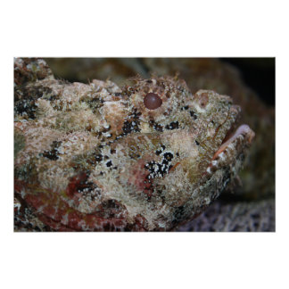 frogmouth fish head view weird animal image print
