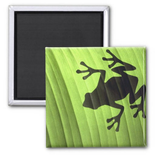 Frogs 2 Inch Square Magnet