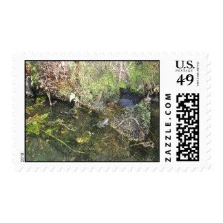 Frogs and Frog Spawn in a Pond Postage