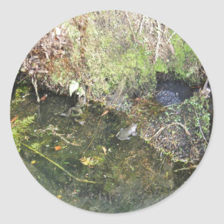 Frogs and Frog Spawn in a Pond  Stickers