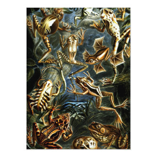 Frogs - Batrachia Card