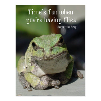 Frogs & Flies Postcard