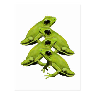 FROGS IN FOUR POSTCARD