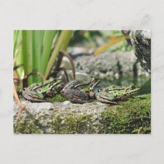 Frogs postcard postcard