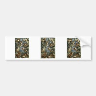 Frogs & Toads Bumper Sticker