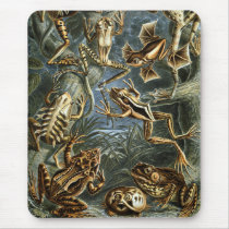 Frogs & Toads Mouse Pad