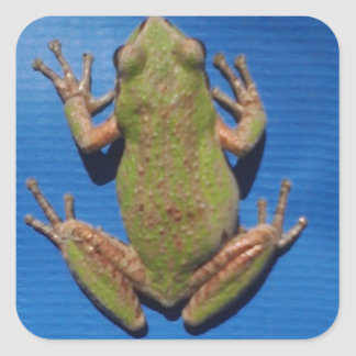 Frogtastic Square Sticker