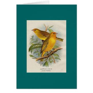 Frohawk - Saffron Finch Cards