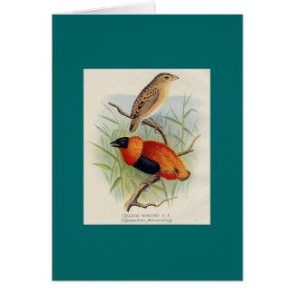 Frohawk - tejedor anaranjado tarjeta de felicitación