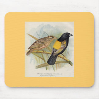 Frohawk - Yellow-Shouldered Whydah Mouse Pads