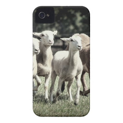 Frolicking Lambs Sheared Sheep Farm Design iPhone 4 Case