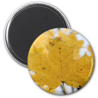 from fall to heaven 2 inch round magnet