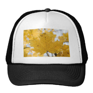 from fall to heaven trucker hat