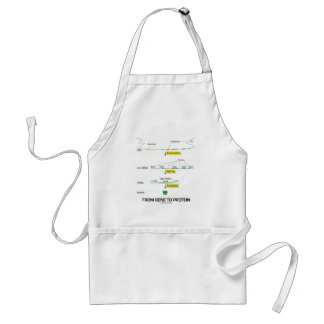 From Gene To Protein Adult Apron