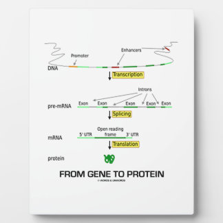 From Gene To Protein Plaque