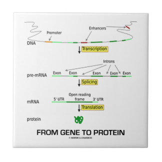 From Gene To Protein Tile