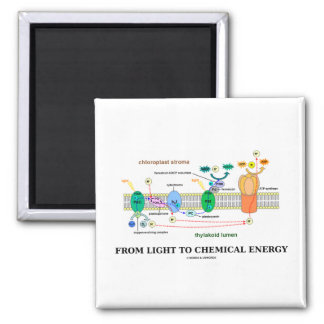From Light To Chemical Energy (Photosynthesis) 2 Inch Square Magnet