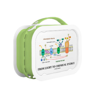 From Light To Chemical Energy (Photosynthesis) Lunch Box