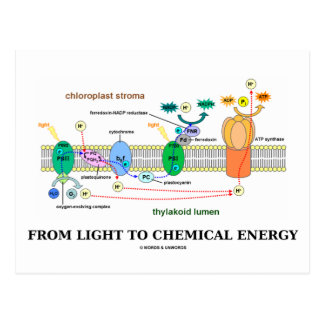 From Light To Chemical Energy (Photosynthesis) Postcard