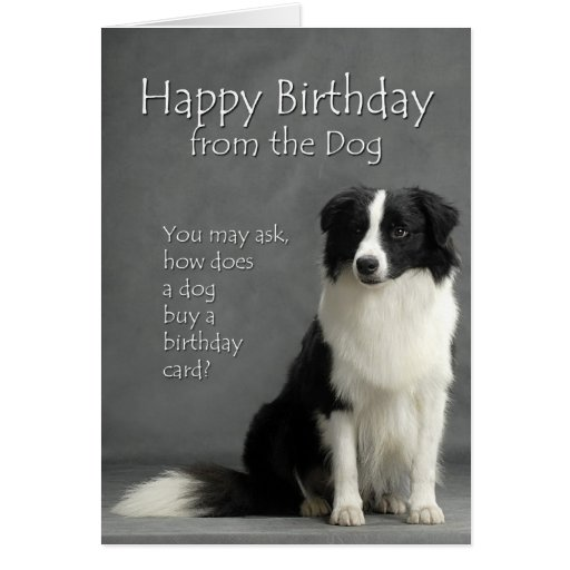 From the Border Collie Greeting Cards