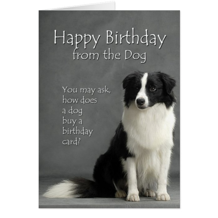 From the Border Collie Card