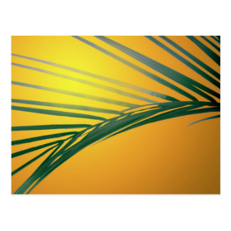 Frond at sunset postcard