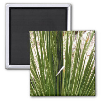 frond magnet