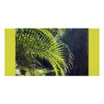 Fronda de hoja de palma, Bucerias, México Tarjeta Fotografica Personalizada