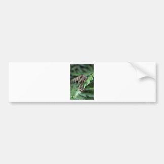 Fronda Nueva Zelanda del helecho Etiqueta De Parachoque