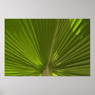 Fronda tropical verde de la palmera póster