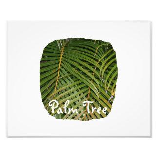 Frondas de la palma con el texto blanco de la palm arte con fotos