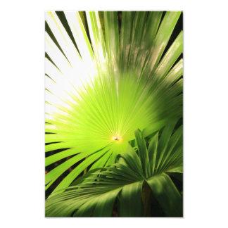 Frondas de la palma en la luz del sol, paisaje tro impresiones fotográficas