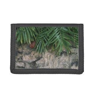 Frondas de la palma sobre la foto aseada del jardí