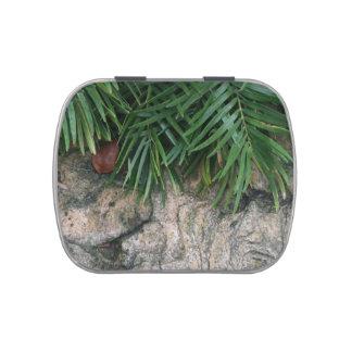Frondas de la palma sobre la foto aseada del jardí frascos de caramelos