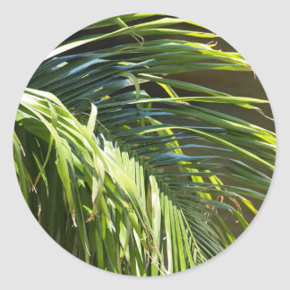 Frondas de la palmera pegatina redonda