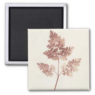 Fronds of Leaves, 1843 (b/w photo) 2 Inch Square Magnet