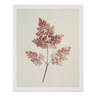 Fronds of Leaves, 1843 (b/w photo) Print