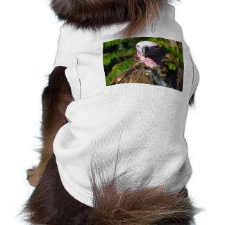 Front Facing Turkey Vulture Closeup Dog Clothes
