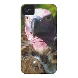 Front Facing Turkey Vulture Closeup iPhone 4 Case-Mate Case