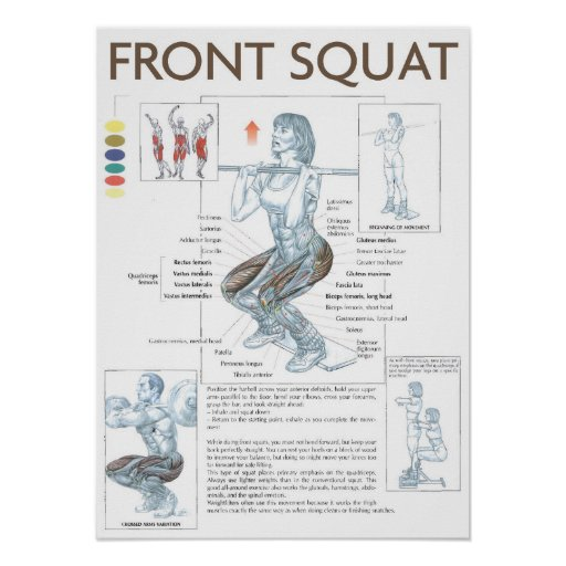 Front Squat Anatomy Exercise Instruction Poster