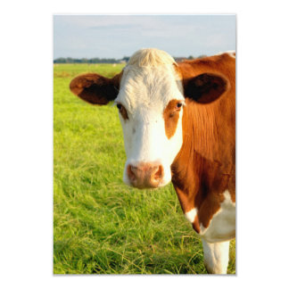 Front view Friesian cow Card