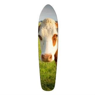 Front view Friesian cow Skate Decks